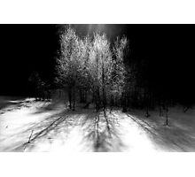 nature 4 black and white film Photographic Print