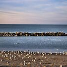 Break Wall on Lake Erie by Sheri Nye