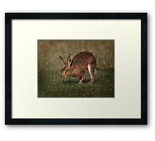 Hare On The Hop Framed Print