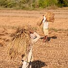 Rice threshing - Chitwan by Christopher Cullen