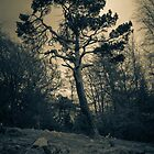 Bent Pine by Errne