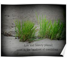 Beauty in Harsh Conditions Poster