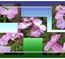 Geraniums by aprilann