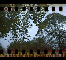 Holga Sprockets Trees and Sky by lanesloo