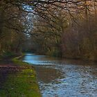 Canal under Cover in the winters sun by Avril Harris