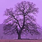 Tree on a winters morning by Avril Harris