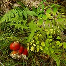 Red Mushrooms and Ferns by Chad Burrall