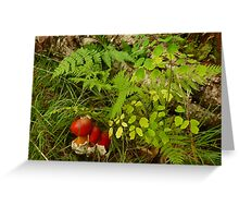 Red Mushrooms and Ferns Greeting Card