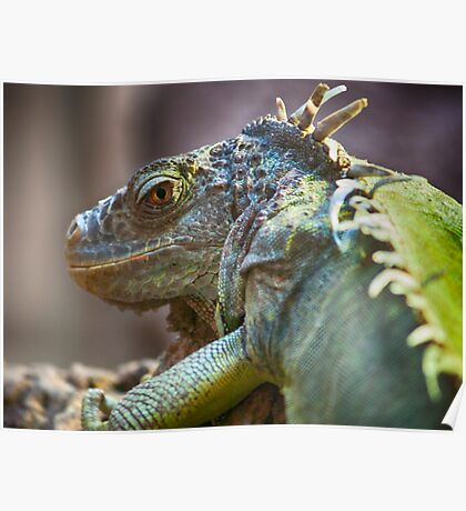 The Reptilian Poster