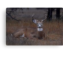 Mellow Buck - White-tailed Deer Canvas Print