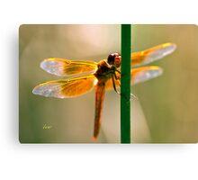 Orange Wings Canvas Print