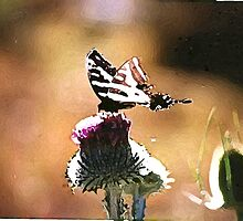 Butterfly on a Thistle by mark alan perry