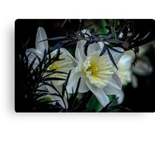 Daffodils and Elderberry  Canvas Print