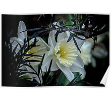 Daffodils and Elderberry  Poster