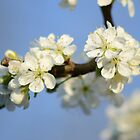 Plum Blossom Twigs by Nixcy