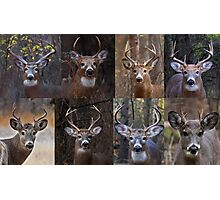 Magnificent Eight - White-tailed Deer Photographic Print