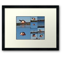 SKY Whale Canberra 100 years Birthday gift Framed Print