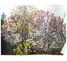 Magnolias & Apple Blossoms Poster