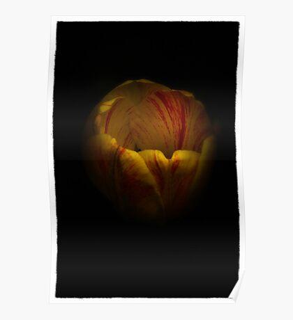 Single Tulip Poster