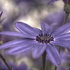 HDR Senetti #1 by Andrew Pounder