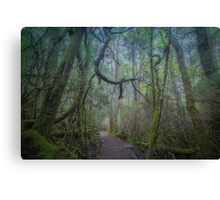 Enchanted Forest, Cradle Mountain, Tasmania Canvas Print