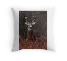 Young Buck - portrait - White-tailed Deer Throw Pillow