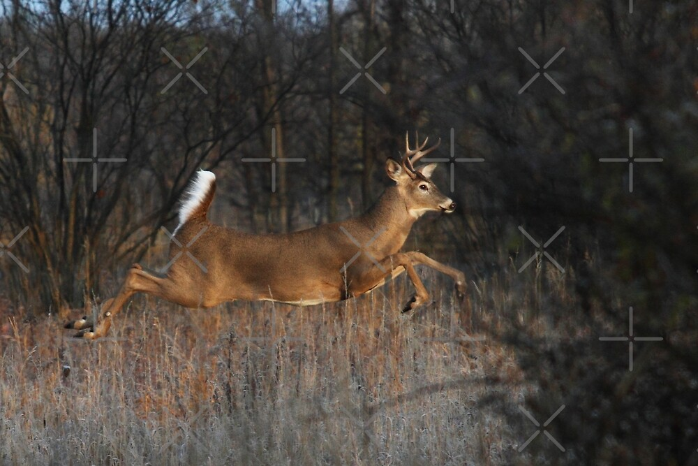 Flight of Fancy - White-tailed Deer by Jim Cumming