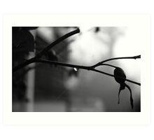 A Branch of Light Art Print