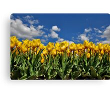 Tulipmania in Holland 2 Canvas Print