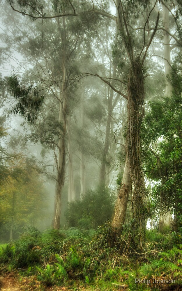 Bushland Dreams - Mount Wilson - NSW  - The HDR Experience by Philip Johnson