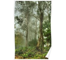 Bushland Dreams - Mount Wilson - NSW  - The HDR Experience Poster