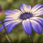 HDR Senetti #3 by Andrew Pounder