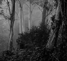 Textures 3  - Mount Wilson - NSW  - The HDR Experience by Philip Johnson