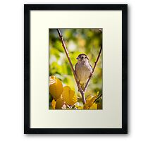 little sparrow in a falk Framed Print