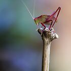 Sitting Pretty on a Stick by yolanda