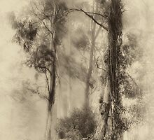 Mount Wilson - The Sepia Series #3 - Mount Wilson NSW  - The HDR Experience by Philip Johnson