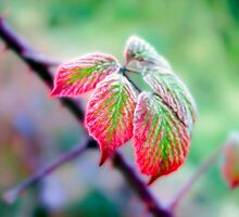Painted Leaves by Bob Noble