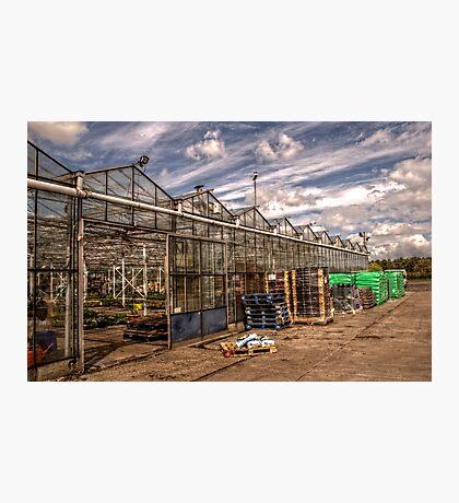 Greenhouse Photographic Print