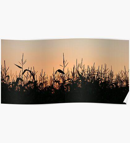 Sunset Cornfield Poster