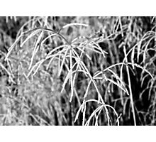 Frosted Garden Photographic Print