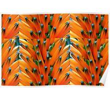 Orange Bud Medley Poster