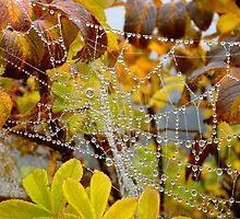 dewy web by kejube