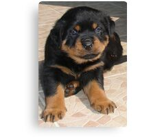 Rottweiler Puppy With Perplexed Facial Expression Canvas Print
