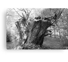 monochrome tree trunk Canvas Print
