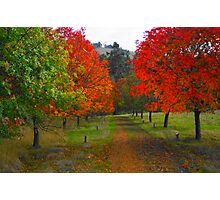 Red Path Photographic Print