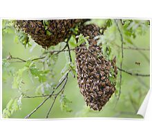 Honey Bee Swarm Poster