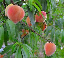 Peachy by paulbl