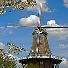 De Zwaan in Cherry Blossoms by Maria Dryfhout