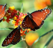 Queen Butterfly by loiteke