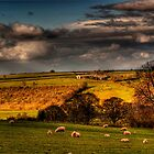 Stormy Summers Evening by gardencottage